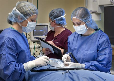 Surgery | Upstate Vet Specialty Veterinary Services