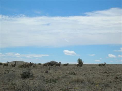 Van Horn, TX Farms and Ranches for sale Property ID