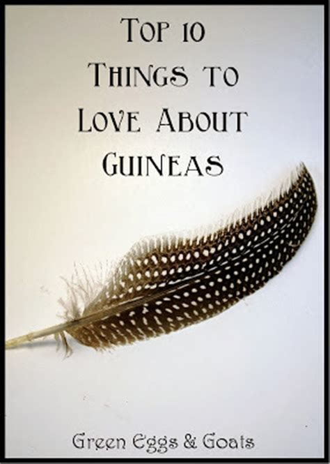 Things to Love About Guineas