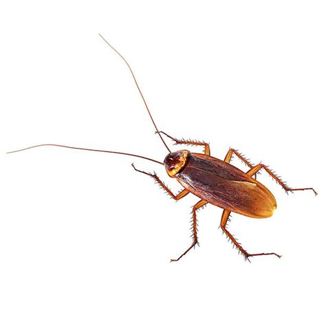 Residential Pest Control Services - All Pest Proz